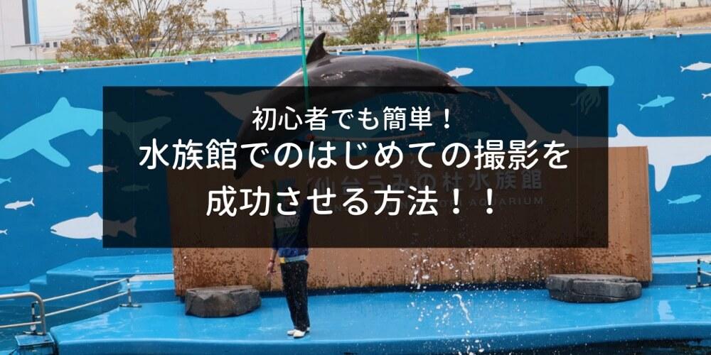 Eos Kiss M を使った水族館での写真撮影方法!初心者でも簡単に楽しく写真が撮れる