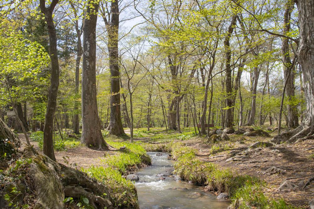 RF 35mm F1.8 MACRO IS STM で撮った緑がきれいな森の写真